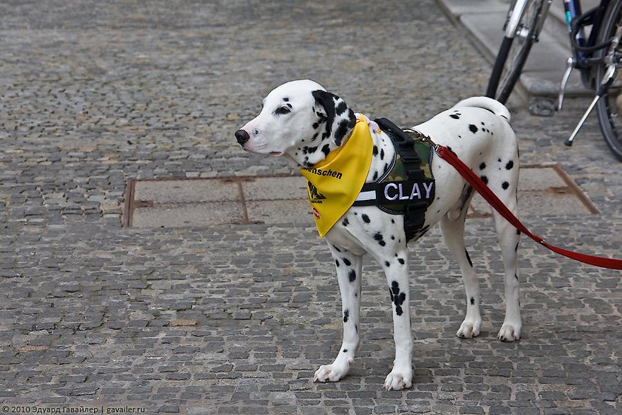 Таблички и знаки выгул собак запрещён