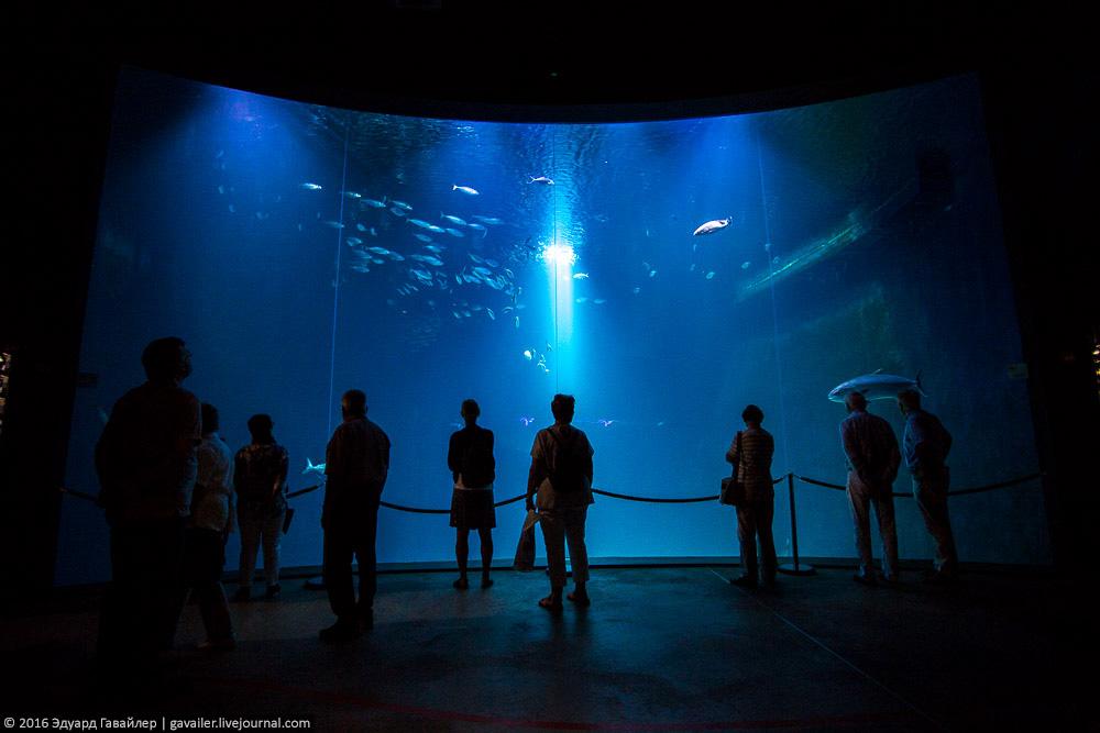Крупнейший океанариум Германии и город Штральзунд -