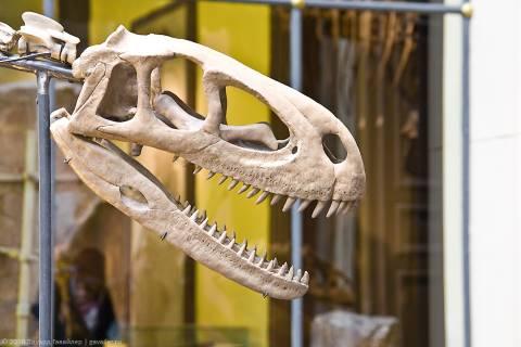 Где находится самый большой скелет динозавра?