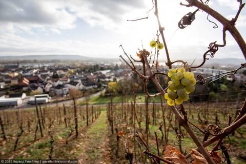 Гайзенхайм и Рюдесхайм — два города на Рейне