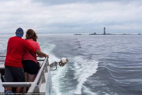 Увидеть китов в Бостоне