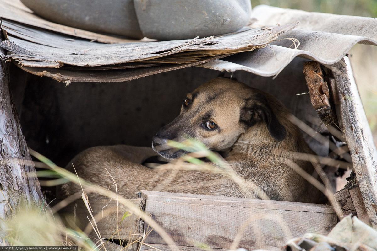 Бездомные собаки у тбилисского водохранилища в Грузии