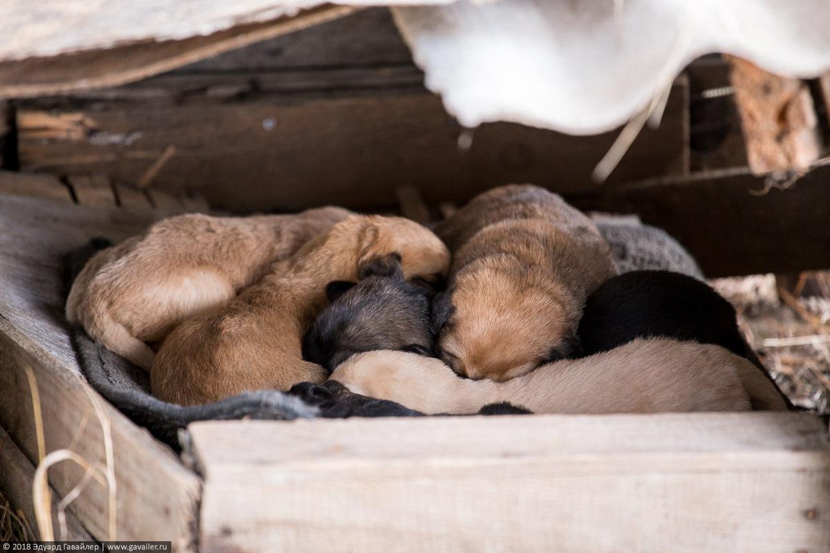 Бездомные щенки в Грузии