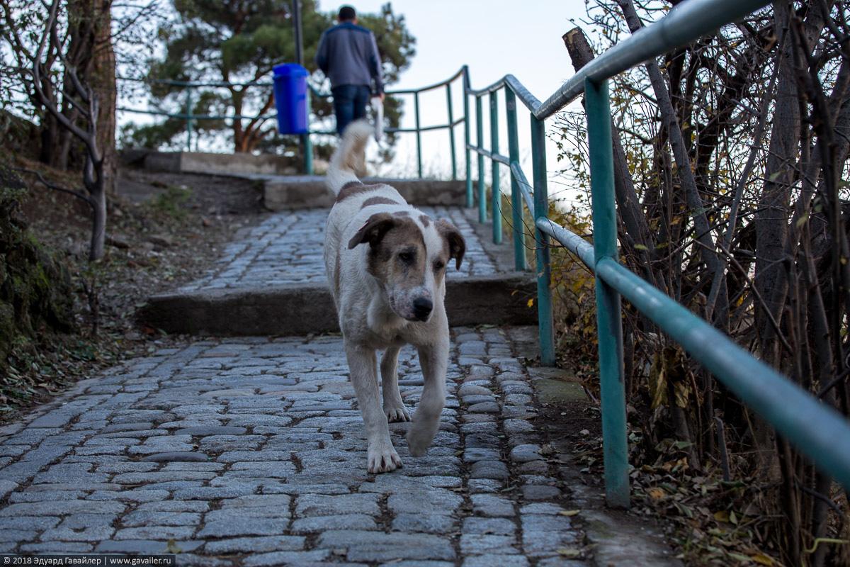 Собака на дорожке в крепости Нарикала в Тифлисе