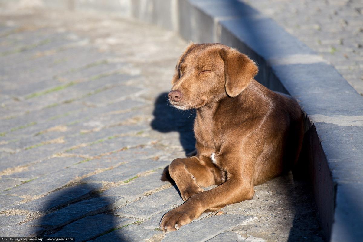 Собака греется на солнце в Тбилиси